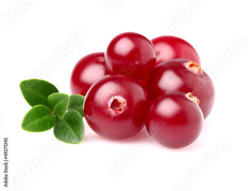 Ripe cranberry in closeup