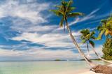 Fototapeta tropikalny - drzewo - Plaża