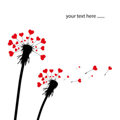 Pusteblumen Liebe