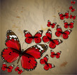 Colorful vintage background with butterfly. Grunge paper texture
