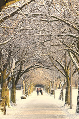 Winter pathway, Edinburgh, Scotland