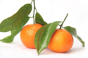 small mandarin clementines