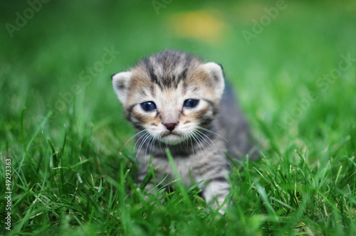 Kitten in green