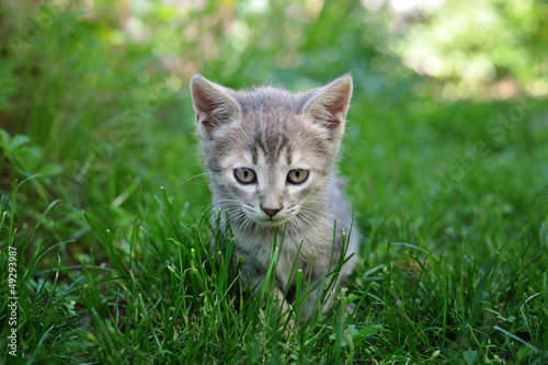 Kitten in the green background