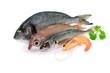 Fische, Garnele