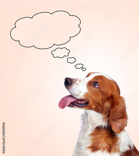 Pensive hunting dog