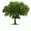 Obrazy na płótnie, fototapety, zdjęcia, fotoobrazy drukowane : Tree
