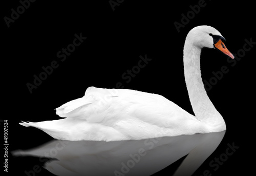 Foto op Canvas Zwaan White swan floats in water.