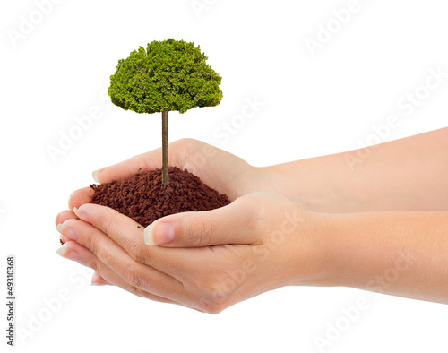 Hands and tree