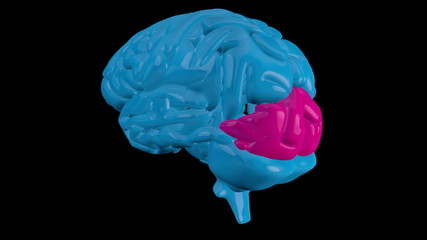 Blue brain with highlighted occipital lobe