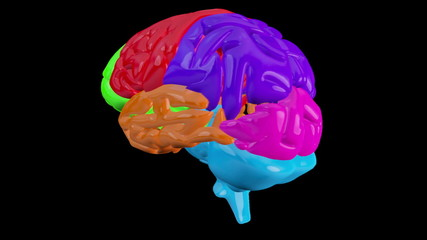 Revolving brain with highlighted sections