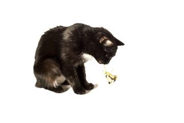 Кошшка с колокольчиком