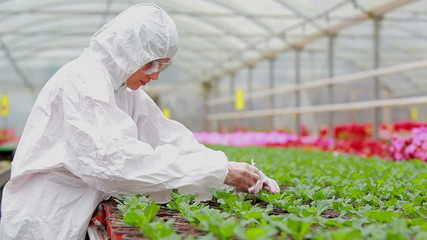 Woman in protective suit checking the plants