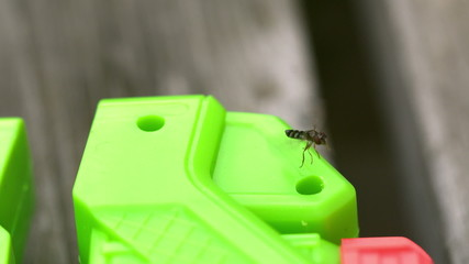 Insect flying around a toy