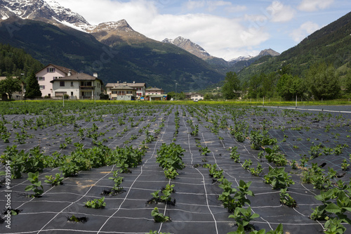Agriculture in Switzerland.