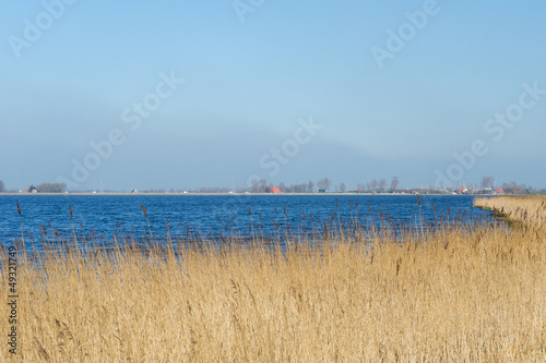 Landscape with water reed and horizon