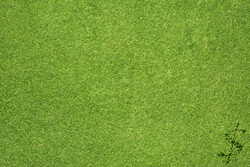 Dollar icon on green grass background