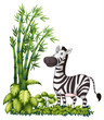 A zebra near the bamboo grass