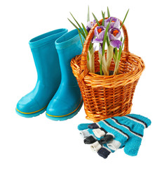 Crocuses in a basket, gloves and boots on a white background