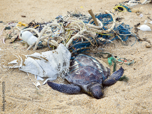 Dead turtle in fishing nets - 49335711