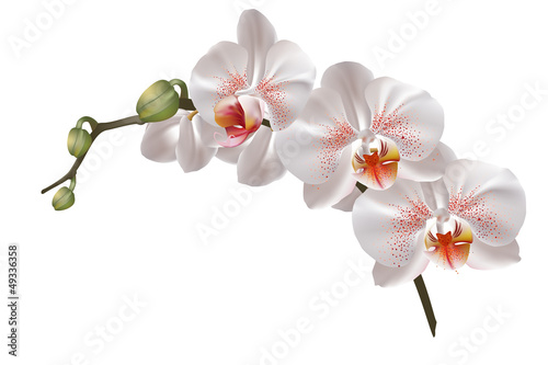 White orchid flowers - 49336358