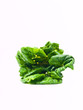 Fresh baby bok choy, Brassica rapa chinensis,  isolated on white