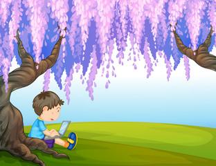A young boy under a big tree