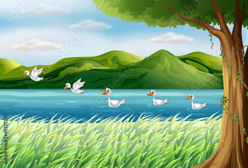 Five ducks in the river