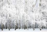 Fototapety Russian winter in january