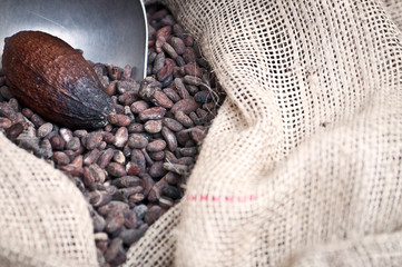 Cacao - close up