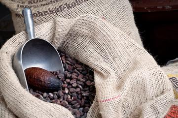 Cacao - cioccolata