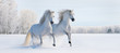 Two galloping white ponies - 49342359