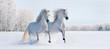 Leinwanddruck Bild - Two galloping white ponies