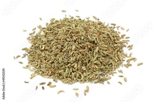 Semi di finocchio - Fennel seeds