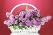 beautiful lilac flowers in basket on red background