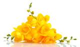 Fototapeta tło - piękny - Kwiat