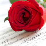Fototapety Red rose on musical score