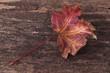 Autumn leaves on burn wood