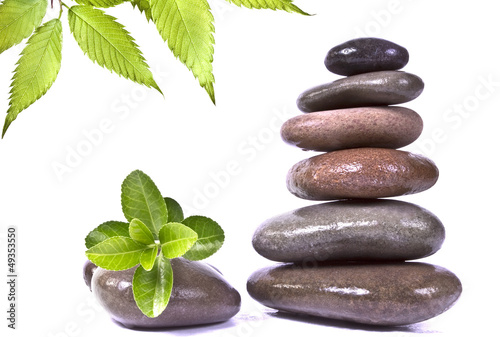 Black stones and green plant with drops