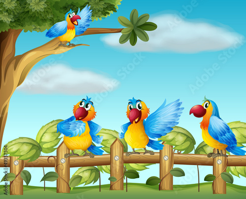Colorful parrots at the fenced garden