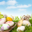easter eggs and rabbit on green grass