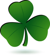 Green Shamrock isolated on white.