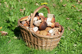 Basket with boletus edulis on grass