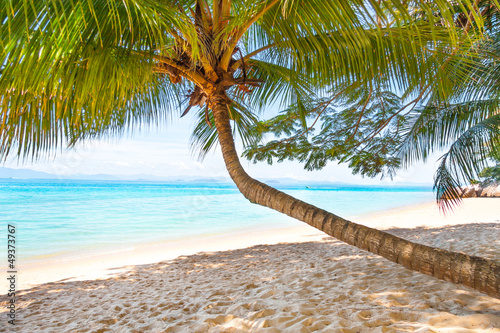 palm tree over beach