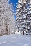 Fototapety Winter, Schnee, Frost, Wald, Himmel, Straße
