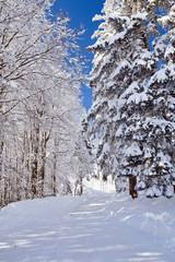 Winter, Schnee, Frost, Wald, Himmel, Straße
