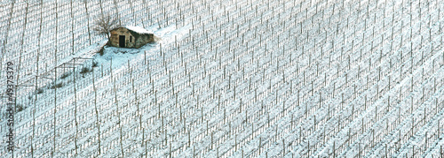 Vineyards rows covered by snow in winter. Chianti, Florence, Ita
