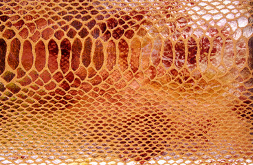 Close-up of snakeskin leather
