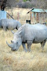 Nashörner im Markweti-Park, Südafrika