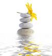 zen spa stones with flower